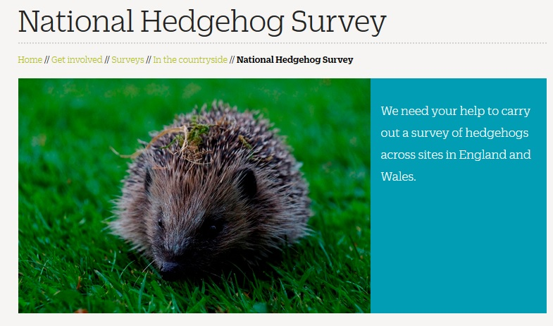 national hedgehog survey